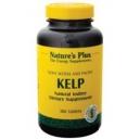 Alghe marine Kelp