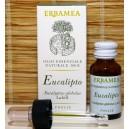 Eucalipto - Erbamea
